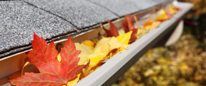 Are your gutters full? Your guide to gutter maintenance.
